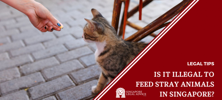 woman feeding stray cat