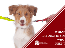 "Featured image for the ""When Couples Divorce in Singapore, Who Gets to Keep the Dog?"" article. It features a dog on two leashes, with the leashes being pulled by different hands in opposite directions."