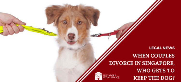 """Featured image for the """"When Couples Divorce in Singapore, Who Gets to Keep the Dog?"""" article. It features a dog on two leashes, with the leashes being pulled by different hands in opposite directions."""