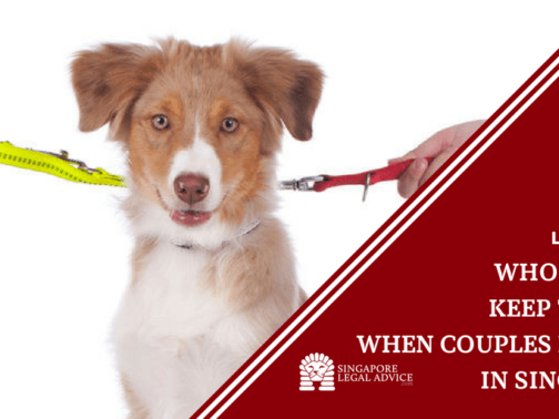 "Featured image for the ""Who Gets to Keep the Dog When Couples Divorce in Singapore?"" article. It features a dog on two leashes, with the leashes being pulled by different hands in opposite directions."